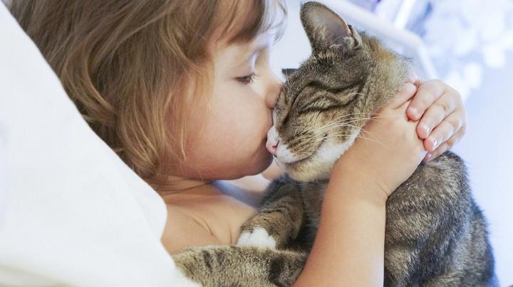 Малыш и кошка: правила общежития