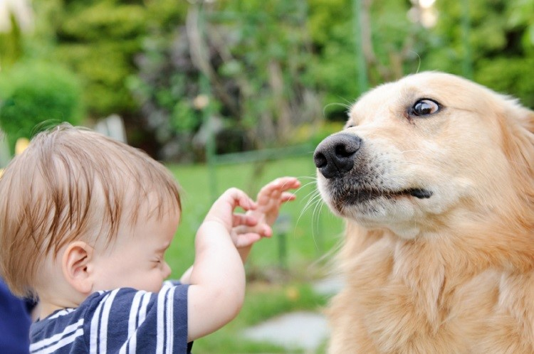 если ребенка укусила собака